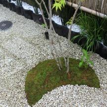 N邸 竹垣と苔の和風中庭